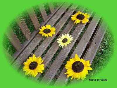 Cathy's Bench of Sunflowers