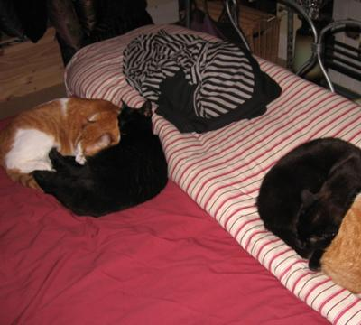 I just think this is SO cute! It's four of my cats