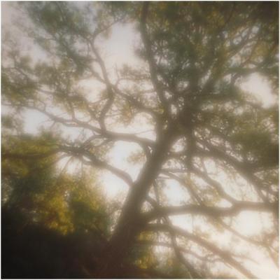 Read in a Tree